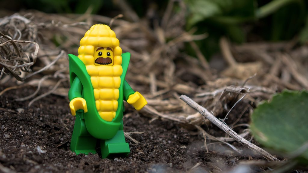Series 17 Review: Corn Cob Guy