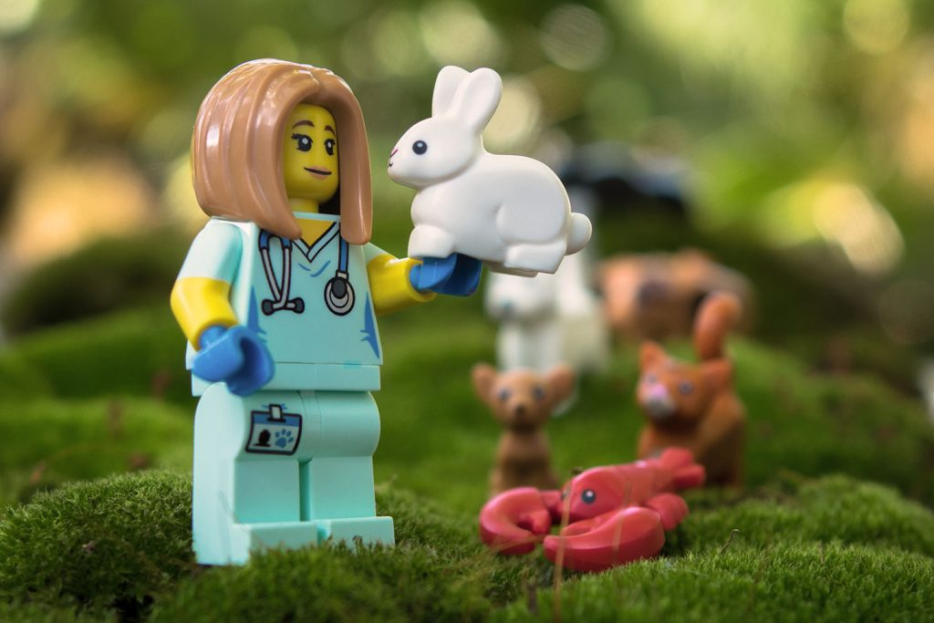 Series 17 Review: Veterinarian