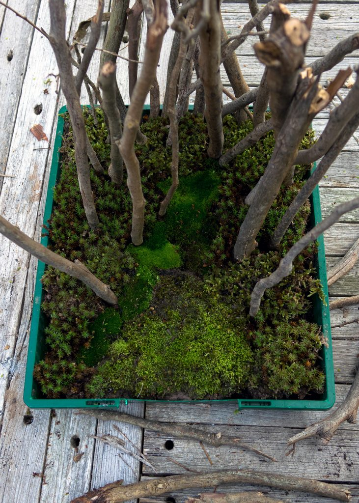 Growing little worlds: Planting trees