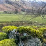 Rocky moss