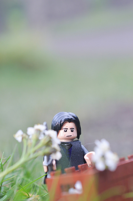 LEGO Snape harvesting potions ingredients