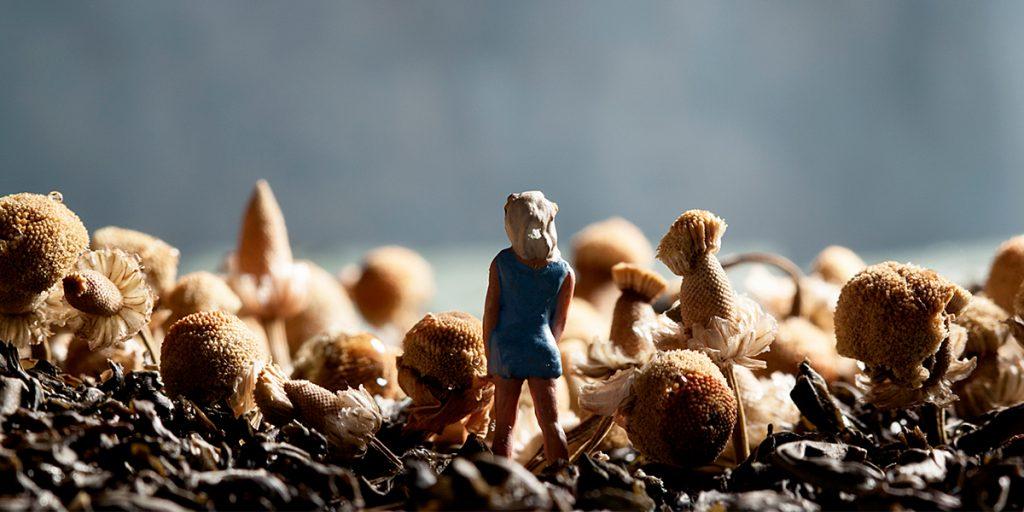 Teascape miniature photography by Tourmaline Jennifer Nichole Wells JNW