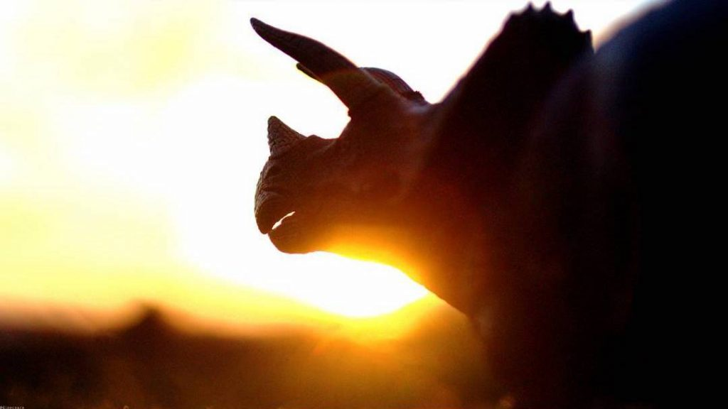 Triceratops by Jon Aiken dinoczars