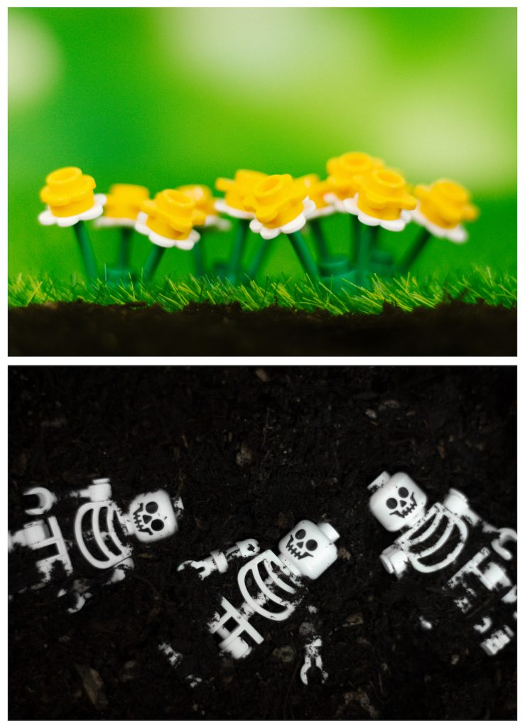 Pushing Daisies LEGO minifigure flowers diptych by James Garcia