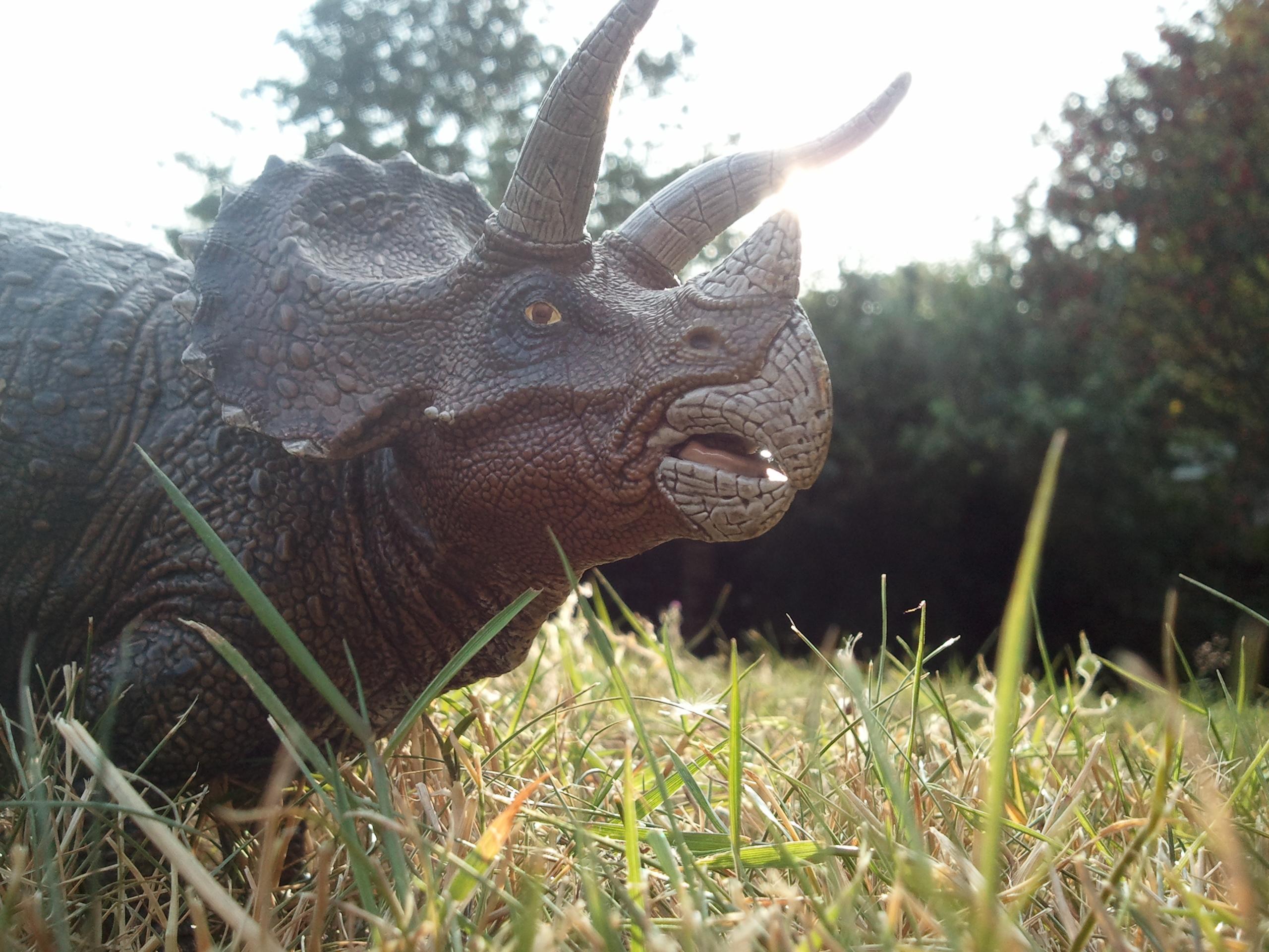 65 Million Years Ago …
