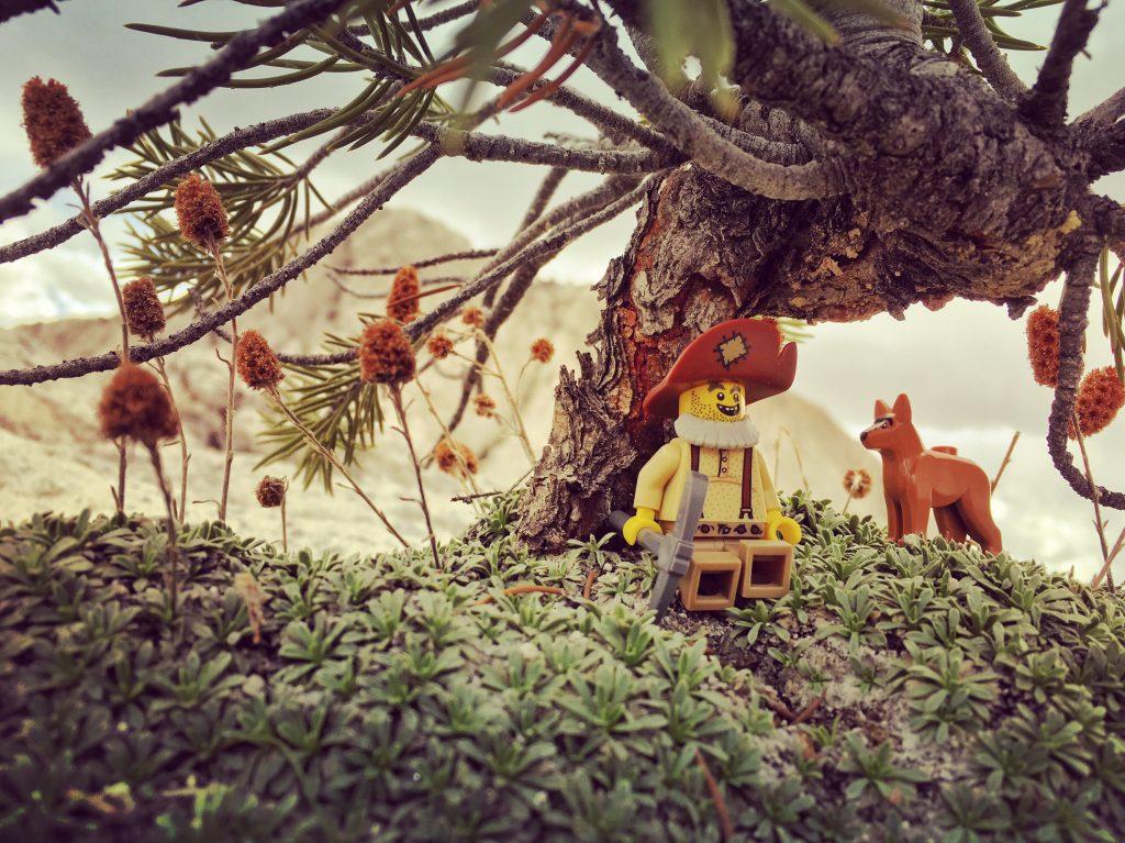 Orvil relaxes under a bonsai juniper