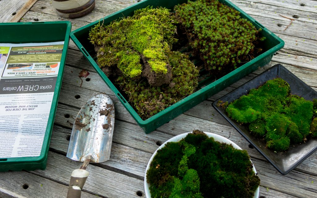 Growing little worlds: Collected moss