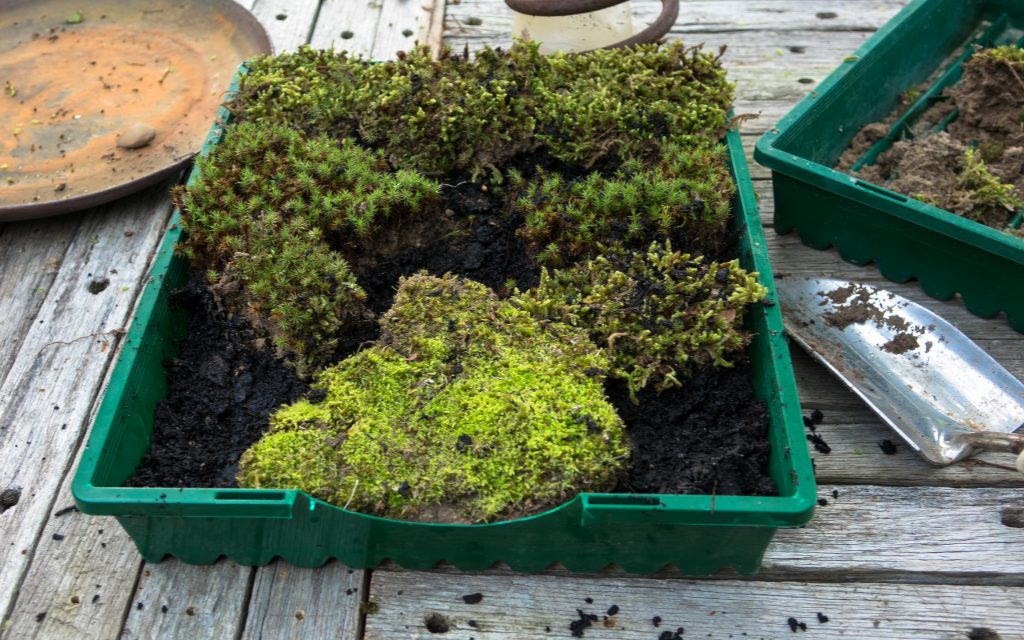 Growing little worlds: Planting the little world