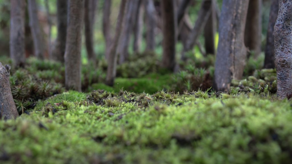 Growing little worlds: I've learned to check the positioning of the trees though the lens as I plant them.
