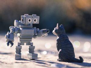 Robot attempts to pet cat