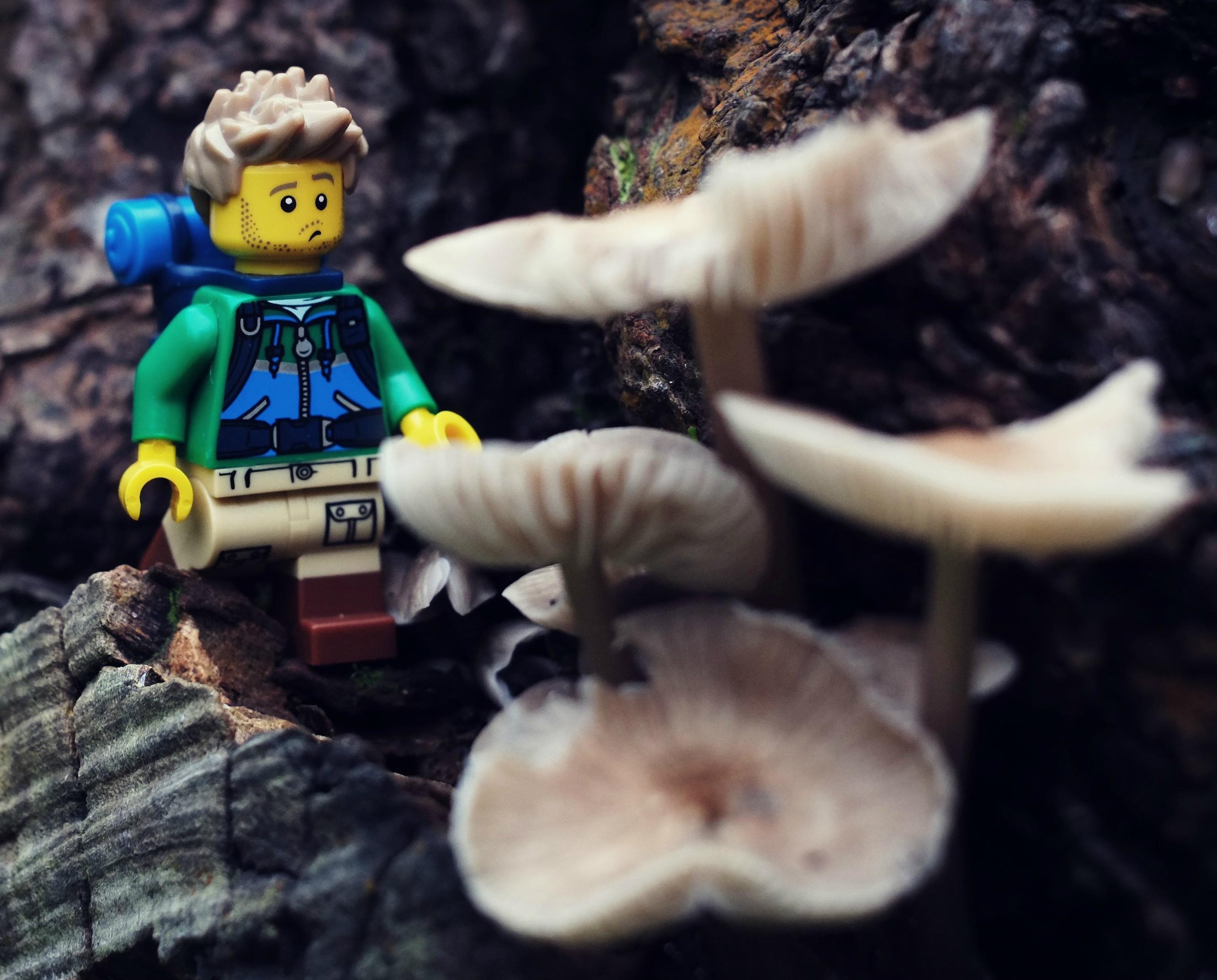 Mushroom Season