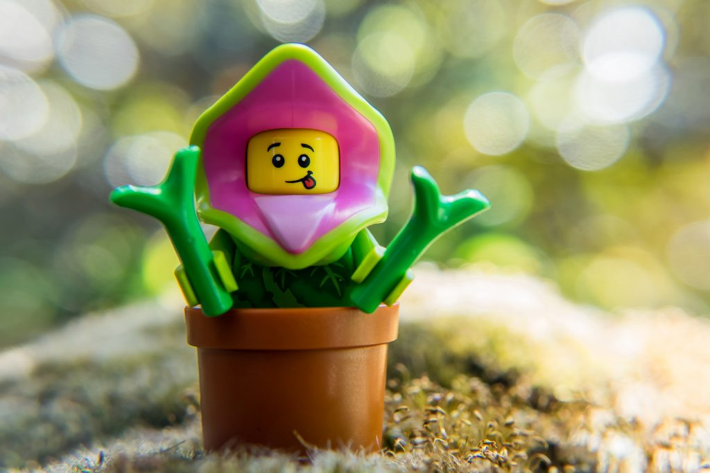 Grow my pretty!