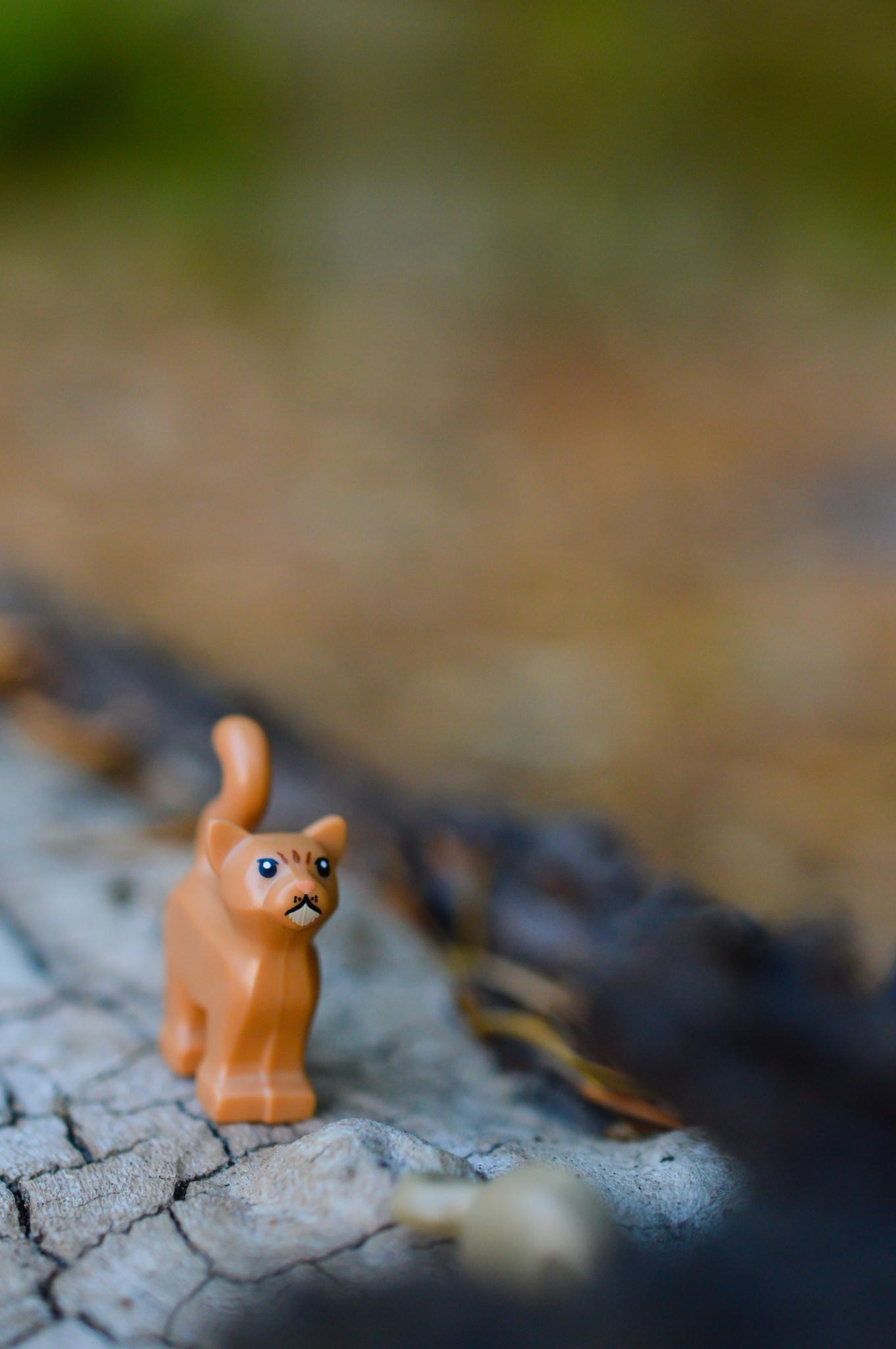 Crookshanks chasing Wormtail