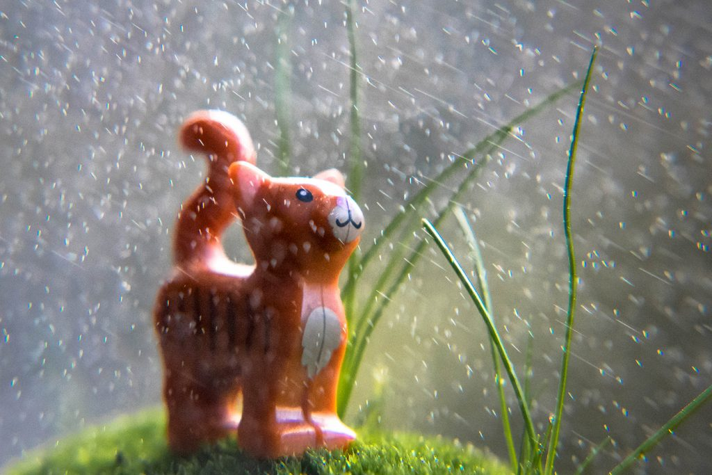 small things: Raining cats and ...