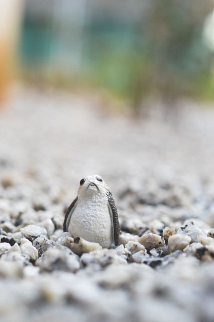 A Porg in a stone bed