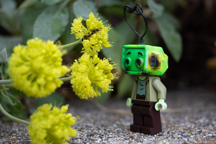 Ray Tenny and yellow flowers by @mightysmallstories