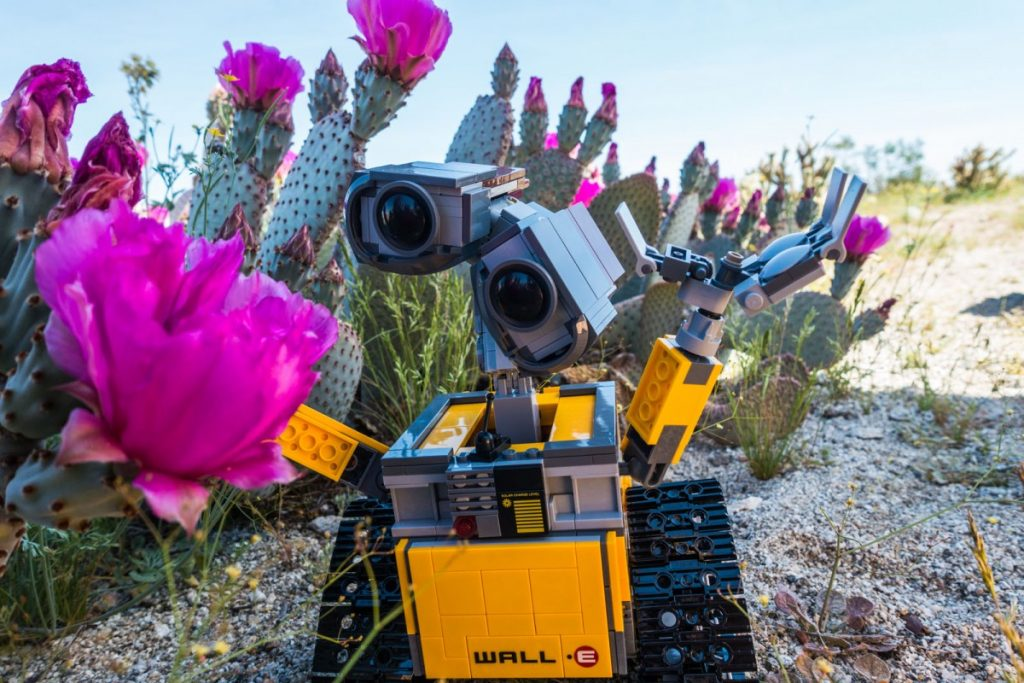 LEGO Wall-E investigating wildflowers in the Anza-Borrego desert in Southern California