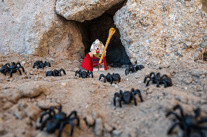 Pharoah Lego Minifig surrounded by spiders