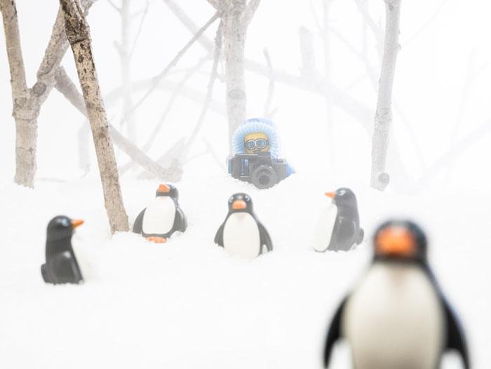 A fun, high-key look. Nature photographer pursuing penguins.