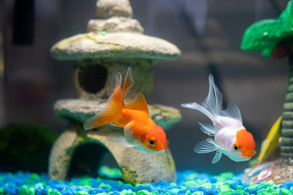 Using Pet Store Aquarium Accessories For Toy Photography