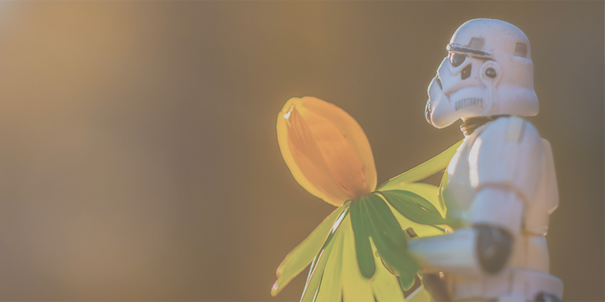 Stormtrooper holding flower by Kristina Alexanderson