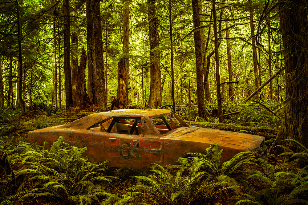 Car in the woods without Photoshop adjustment layers.
