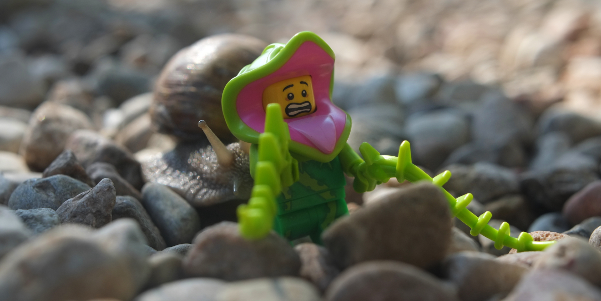 Rose: A LEGO Plant Meets a Real Life Snail