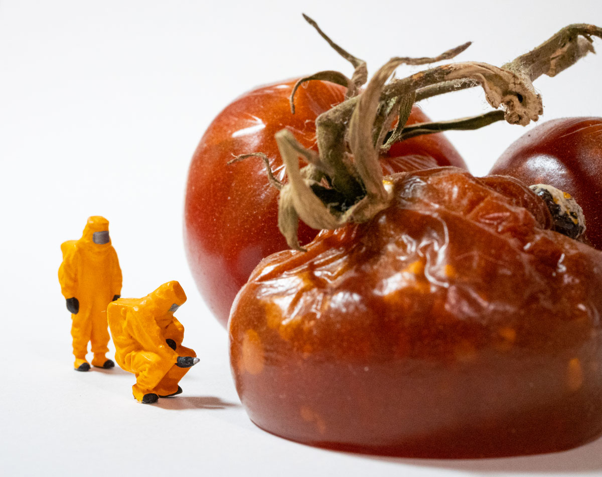 HO scale HAZMAT operators inspecting the rotten tomatoes.