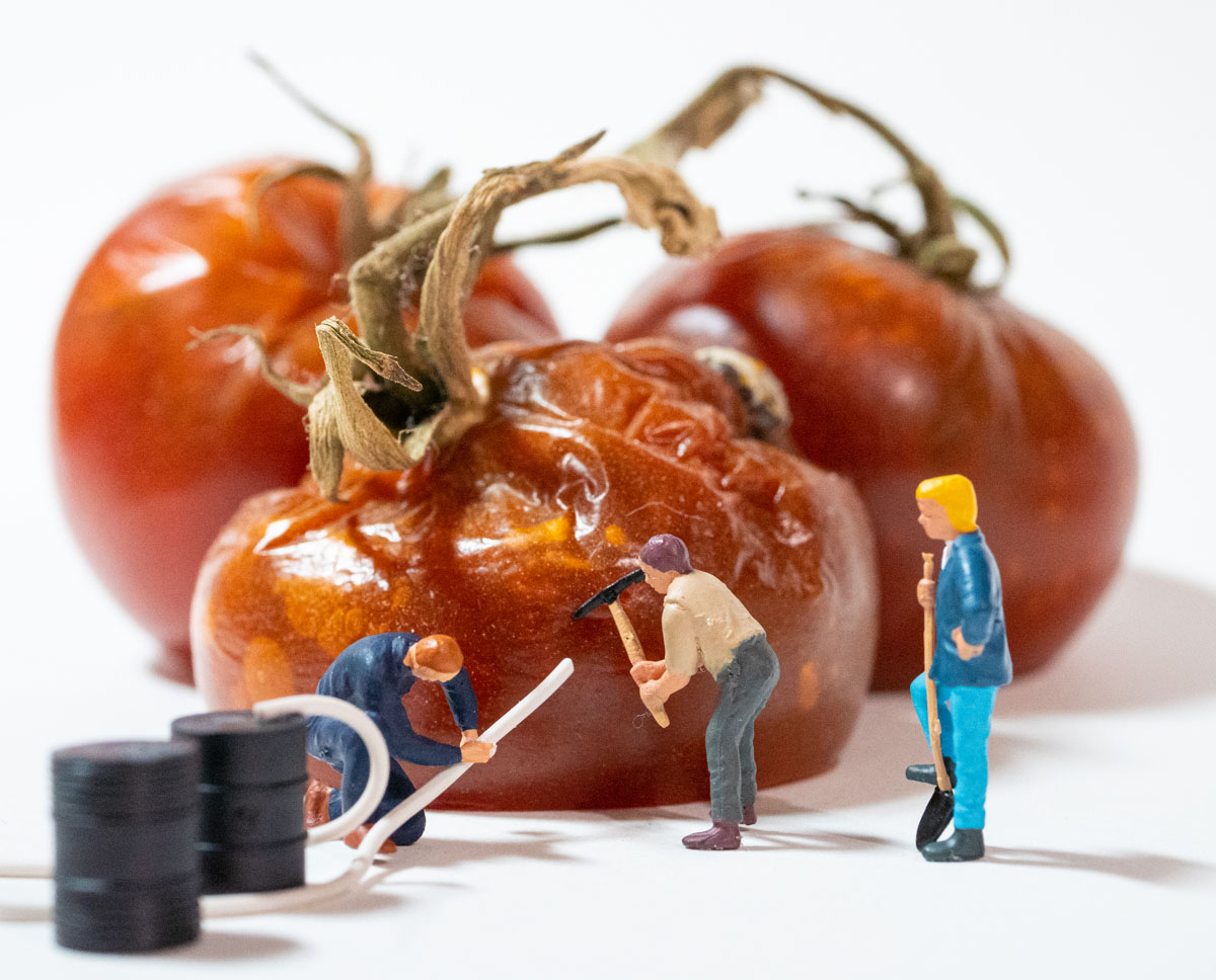 HO scale workers harvesting rotten tomato juice
