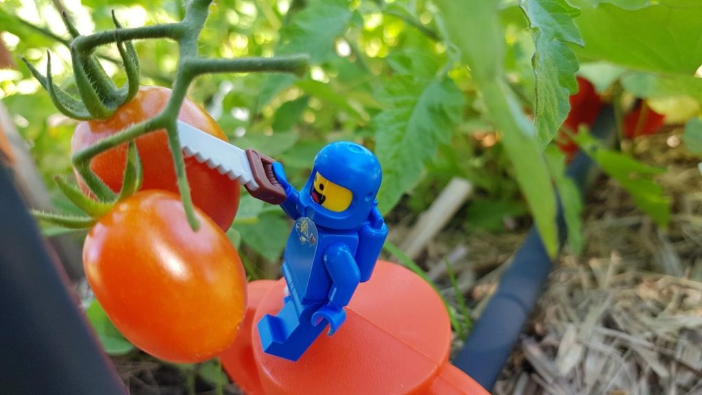 Six Ways to Save the Earth 6IN - Gardening